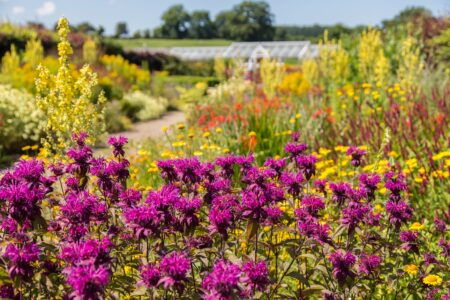 Helmsley Walled Garden Hot border 2